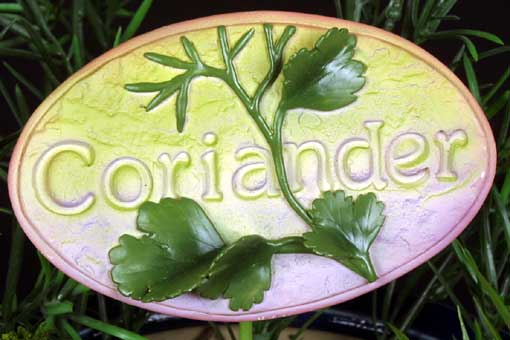 Herb Stake - Coriander