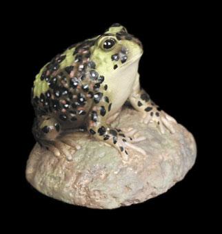 Crucifix Frog