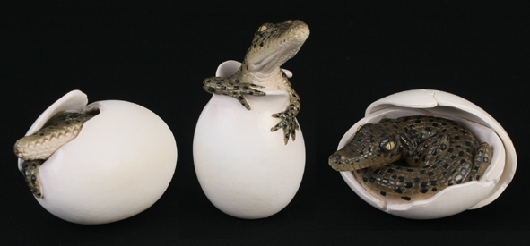 Crocodile Eggs Hatching