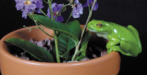 Frogs in Motion Medium