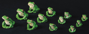 White Lipped Frogs