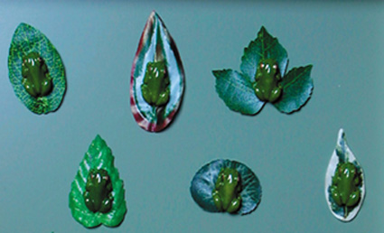 Frogs on Soft Leaves